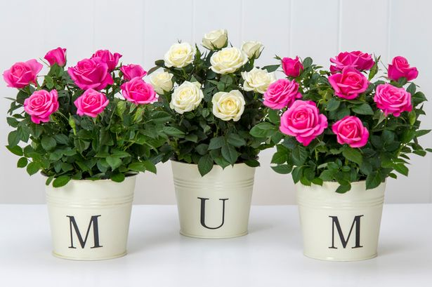 Mother's Day Under €200